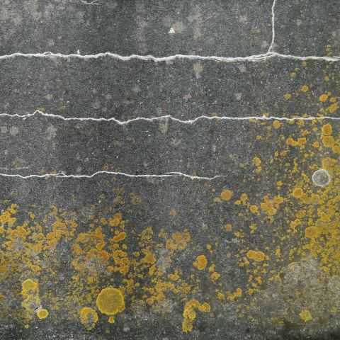 c08178: abstract photo (wall with cracks and lichen) by Ewart Shaw