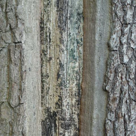 t10163: abstract photo (wood, metal and bark) by Ewart Shaw